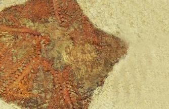 480 milyon yıllık denizyıldızı fosili keşfedildi