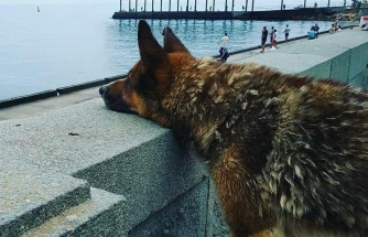9 Yıldır, Boğulan Dostunun Geri Dönmesini Bekleyen Köpek: Kırım'ın Haçiko'su