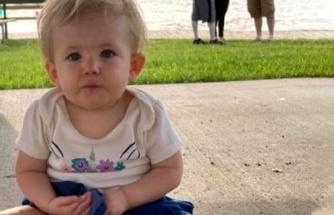 ABD'de pitbull dehşeti: 17 aylık bebeği öldürdü