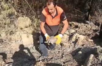 Antalya'daki yangında ekipler, yaralı kaplumbağanın hayatını kurtardı