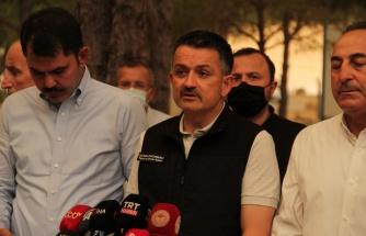 Bakanı Pakdemirli, orman yangınlarına ilişkin son bilgileri paylaştı