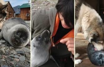 Baykal Gölü Kenarındaki Fokun Yoğun İlgiye Maruz Kaldığı Sevimli Anlar