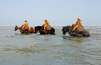 Belçika'da Atlara Binip Okyanustan Karides Toplayarak Geçimlerini Sağlayan İnsanlar