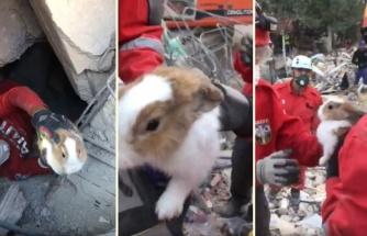 Deprem Enkazında Canla Başla Çalışan Akut Ekipleri Bir Enkazdan Tavşan Kurtardılar
