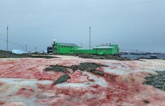 Dünya Kan Kusuyor: Küresel Isınmanın Etkisiyle Antarktika'da Korkunç Görüntüler Ortaya Çıktı