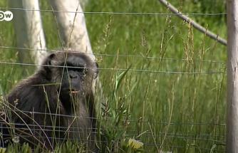 Dünyanın En Büyük Suç Organizasyonu: Barbar Hayvan Ticareti