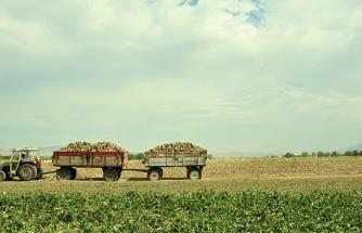 Elazığ'da çiftçiler şeker pancarı mesaisinde
