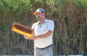 Eşek arıları, Kozan'da arıcıların ve vatandaşların kabusu oldu