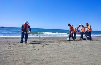 Hatay sahilinde petrol atıklarını temizleme çalışmaları sürüyor
