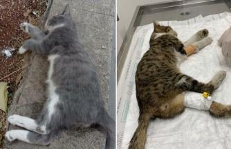 Hayvan Hakları Yasası Nerede? Gaziantep'te Çok Sayıda Kedi Katledildi