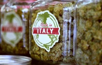İtalya Parlamentosu Kabul Etti: Ülkede Esrar Satışı ve Üretimi Artık Yasal