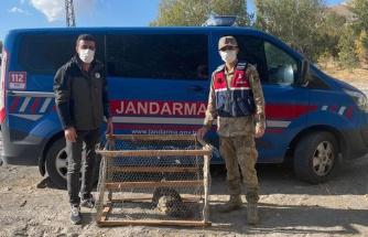 Jandarmadan yaralı baykuşa şefkat eli