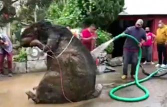 Kanalizasyondan çıkarılan dekor sıçan görenleri şaşkına çevirdi