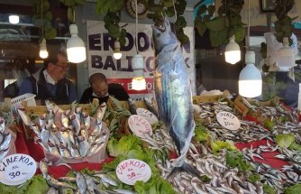 Karadeniz'de torik bereketi; tanesi 300 liraya satılıyor