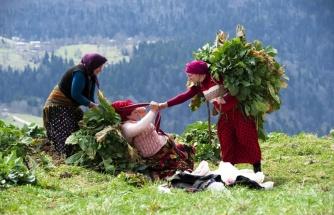 Karadeniz'de Tüm Zamanların Sıcaklık Rekoru Kırıldı