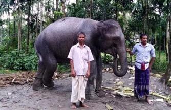 Karısı rüyasında gördü diye fil satın alan çiftçi, şimdi kara kara ne yapacağını düşünüyor