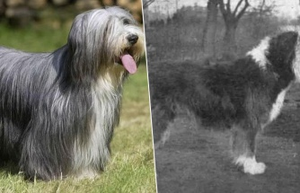 Karşılaştırmalı Fotoğraflarla 100 Yılda Uğradıkları Değişimi Göreceğiniz 12 Köpek Cinsi