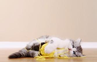 Kedi ve köpeklerin yuttuğu yabancı cisimler hayatlarını riske edebilir