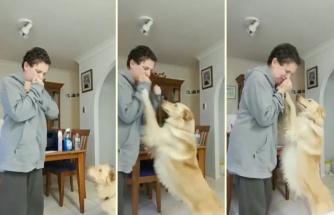 Kriz Anında İnsan Dostunun Kendisine Zarar Vermesini Engellemek İçin Eğitilen Rehber Köpek