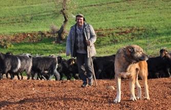 'Latife Ettim' Dedi: Erzurum Valisi'nden