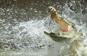Nehirde aniden ortaya çıkan timsah, 8 yaşındaki kız çocuğunu tek hamlede yuttu