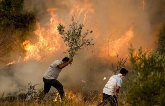 Orman Yangınları Neden Artıyor, Hangi Yıkıcı Sonuçları Beraberinde Getiriyor?