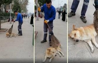Sokak Köpeğini Süpürgesiyle Keyiflendiren Güzel İnsan!