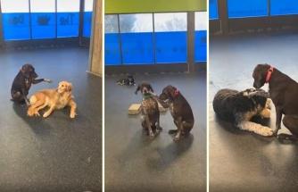 Üzerler Seni Ruby: Arkadaşlarına Sevgi Dağıtan Köpek