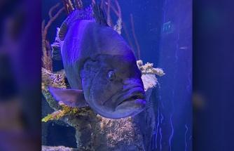Yanındakileri Yeme Alışkanlığından Dolayı Bütün Arkadaşlarını Yedikten Sonra Depresyona Giren Balık