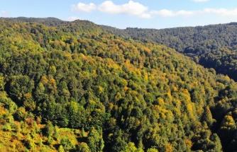 Zonguldak ormanları sonbaharı karşılıyor