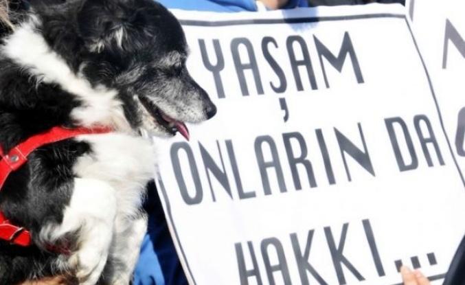 Hayvan Hakları Hâlâ Meclis'te Bekliyor: Yine Bir Yavru Köpeğin Bacakları Kesildi