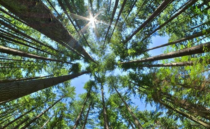 Kahramanmaraş'ta ormanlık alanlara girişler kısıtlandı