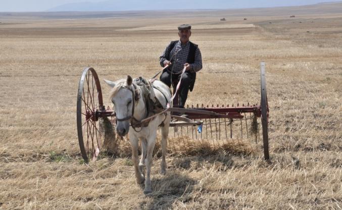 Kuraklığın vurduğu Kars'ta çiftçilerin hasad mesaisi başladı